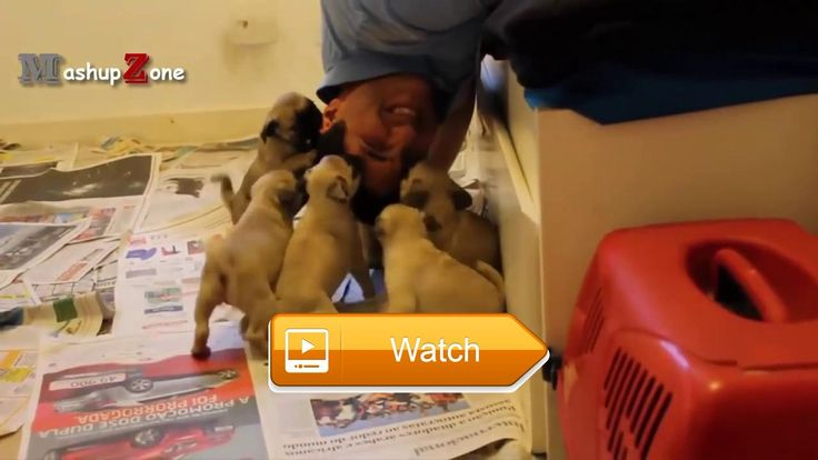 Funny Animals Funny Videos Of Cats Dogs And More  Check out these funny videos of funny animals Funny cats funny dogs and more in this funny animal videos compilation Mashup Zone is a channel with funny  on Pet Lovers