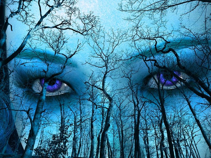 Niebieski, Las, Niebo, Twarz, Oczy, Na Zewnątrz, Drzewa