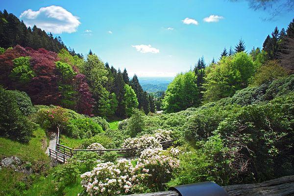 Uno scorcio della splendida valle di rododendri dell'Oasi di Zegna