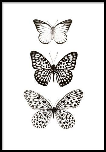 Svartvit tavla med fjärilar. Fjärilstavla i storleken 30x40cm