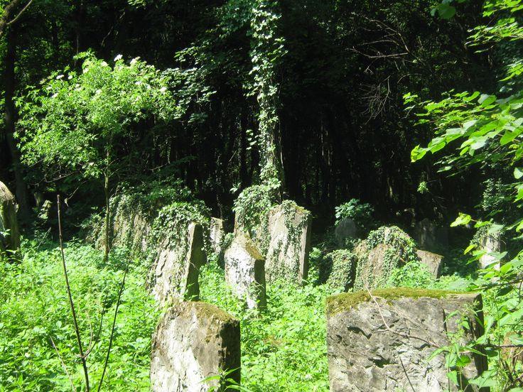 Jewish cementery. Przemyśl.
