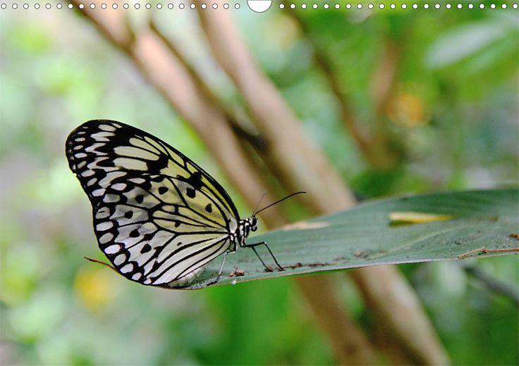 """Tier-Posterbuch """"Schmetterlinge der Tropen"""", Seite 1"""