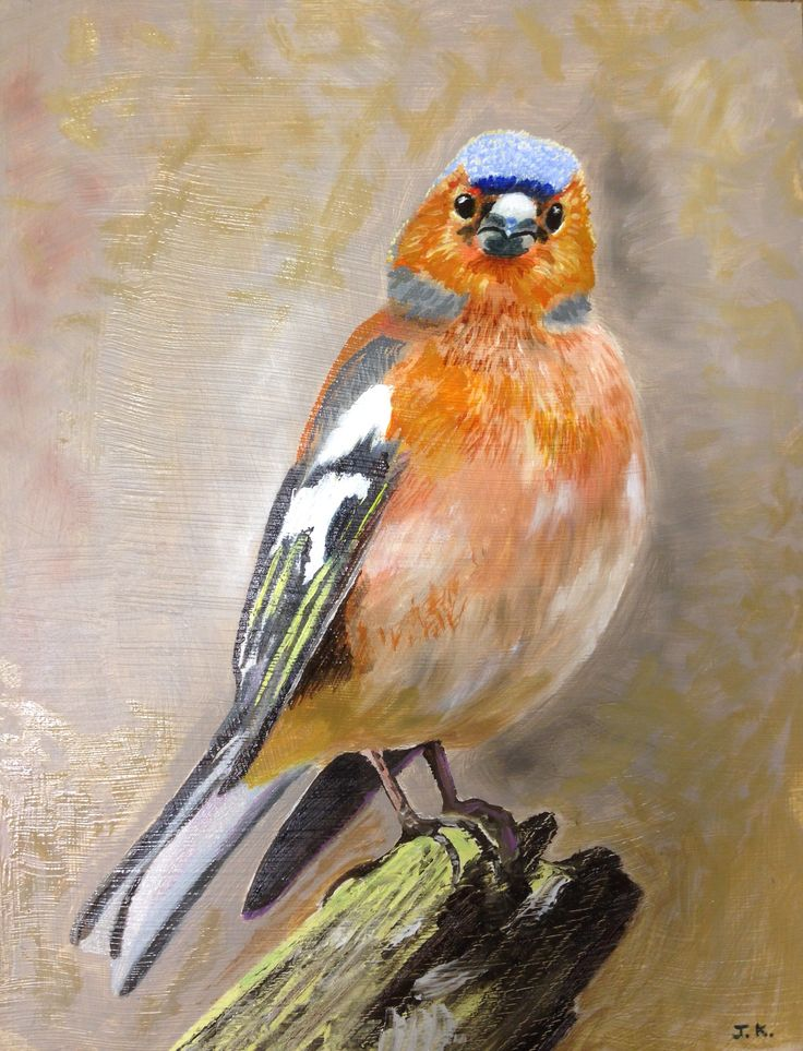 Chaffinch.  Oil Painting on board.