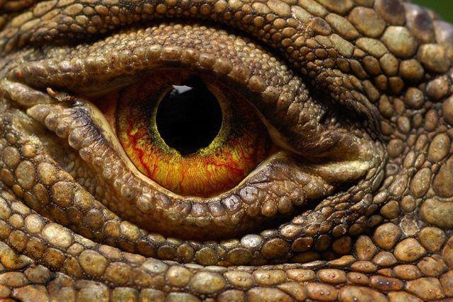 Ojo Dinosaurio Buscar Con Google Ojos