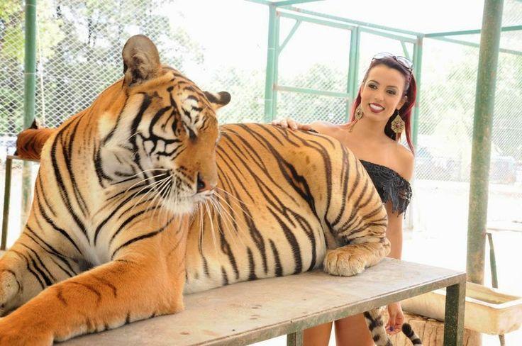 Fashion Maniac Brazil: Entrando nas Jaulas dos animais Selvagens (Zoo de ...