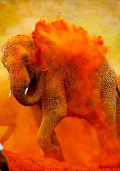 inspiring colourful elephant