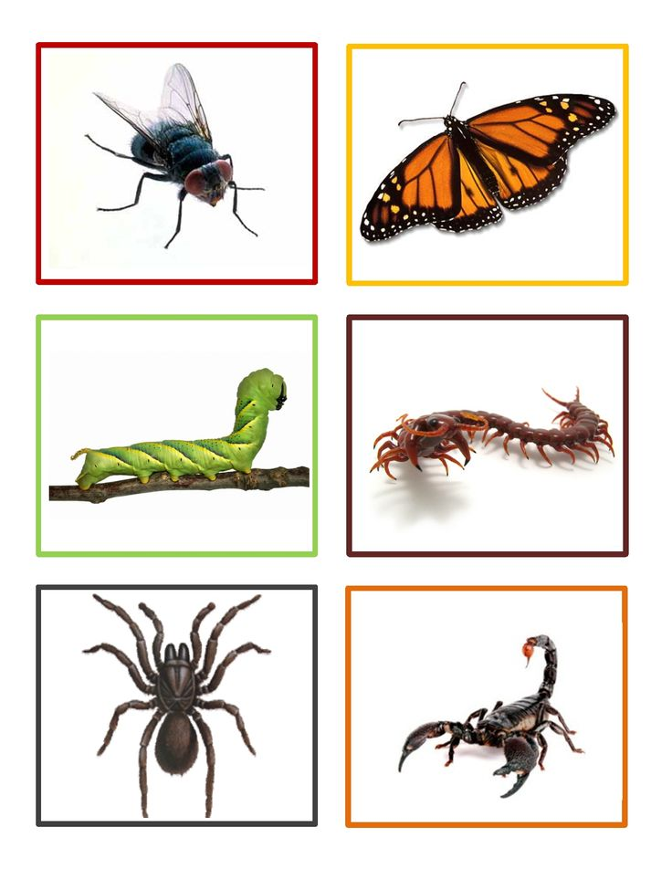 Insect Memory Game is a fun activity for preschoolers to learn about insects and develop memory skills.