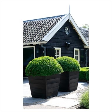 Amazing! Huge shaped buxus in enormous pots. Absolutely love!