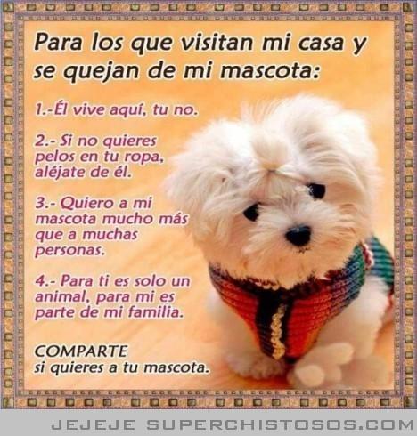 LA PURA VERDAD!!! Mascotas