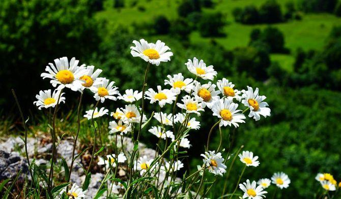 Anxietatea, nervozitatea, stresul, migrenele și durerile neuropate pot fi ameliorate cu ajutorul unor plante medicinale înzestrate cu proprietăți calmante și sedative.