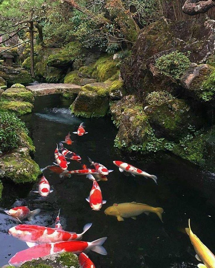 570 best koi pond images on pinterest backyard ponds for Artificial koi fish
