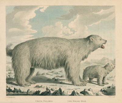 A polar bear and her cub. Available to purchase as a fine art print from the Royal Society Print Shop.