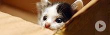 cute little kittens, best website ever :)