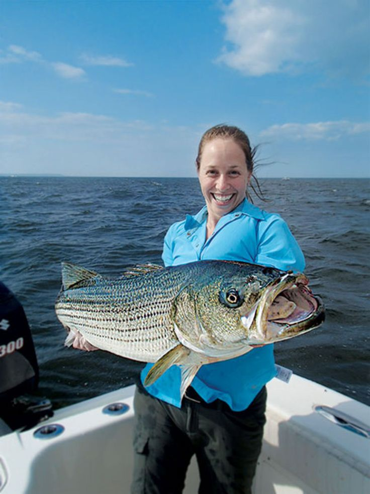10 best images about bluefish fishing on pinterest for Nj fish and game
