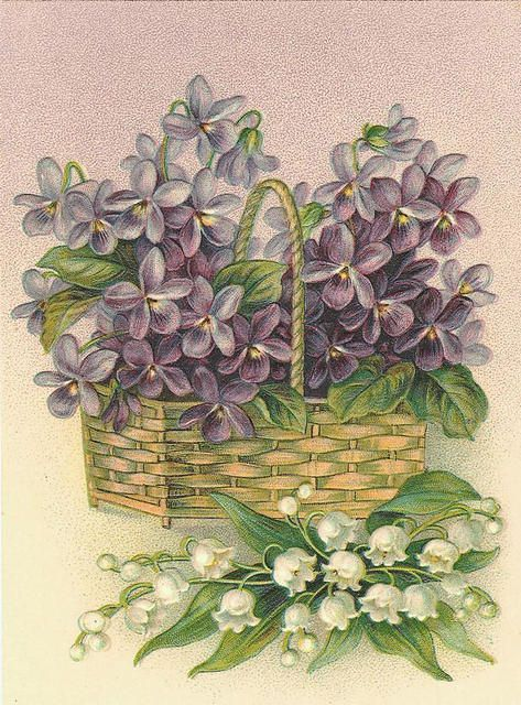 Sweet Violets & Lily of the Valley