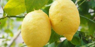 Jak vám citrón a jedlá soda mohou zachránit život?