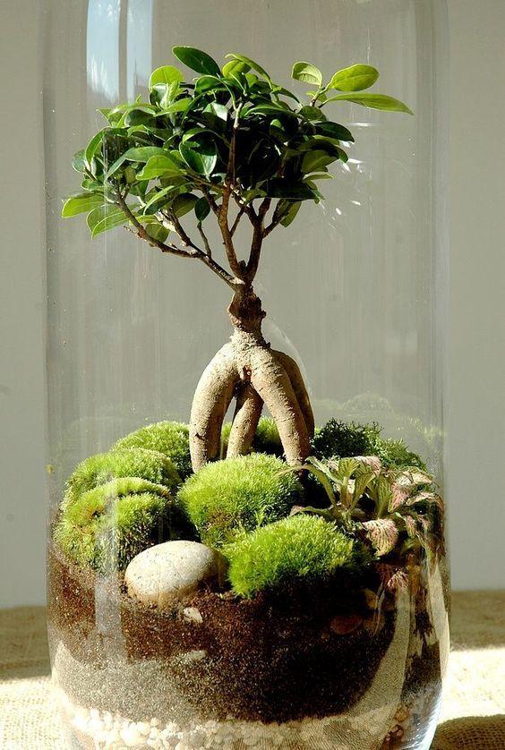 1092 best plantes de lintrrieur images on Pinterest