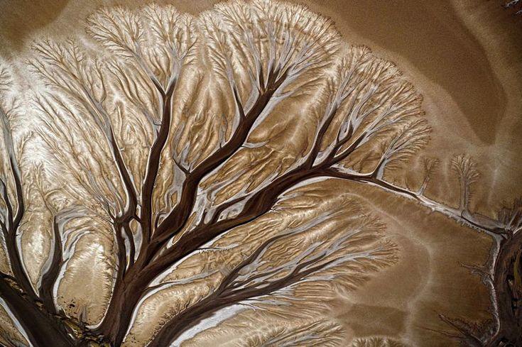 Ted Grambeau - Comme les rameaux d'un immense arbre pétrifié, les innombrables bras d'un des affluents du fleuve Daintree, dans le nord-ouest de l'Australie, ont lentement creusé leur lit dans le limon pour mieux se jeter dans l'océan. Année après année, de nouvelles ramifications sont apparues, poussées par les crues du fleuve et le courant, puis elles se sont sédimentées dans un sable épais mêlé d'argile au bord du Pacifique.