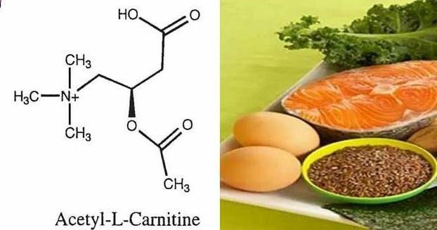 Acetil L-Carnitina, suplemento poderoso para perder grasa