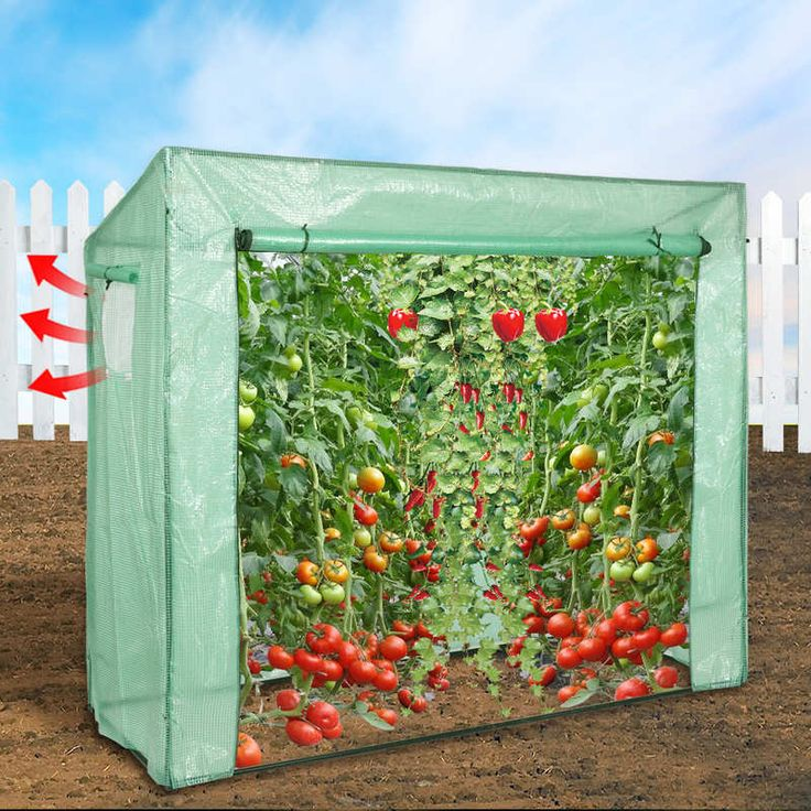 Walk In Garden Greenhouse with PE Cover 196x169cm | Buy Walk-In Greenhouses