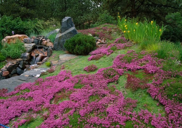 Popular ground cover plants outdoor decor garden ideas for Landscaping ground cover plants