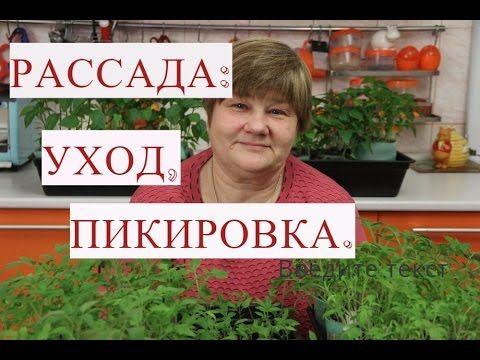 Рассада Томатов. Рассада Перца. Уход за Рассадой, Пикировка.