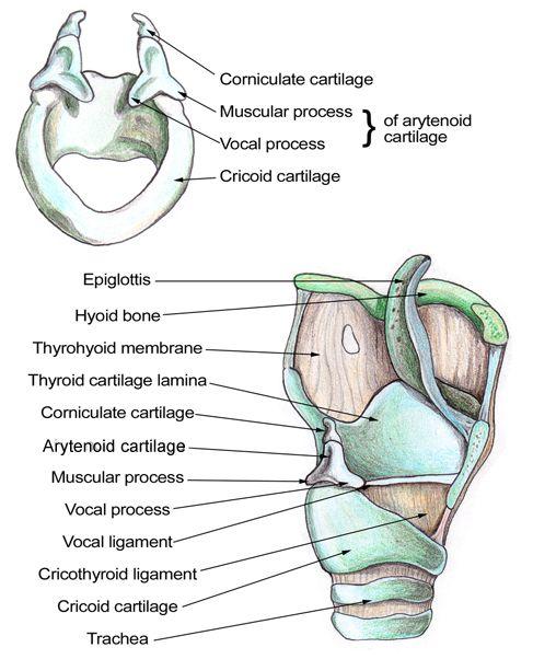 gross anatomy of muscular system labpaq Undergraduate course syllabus  password: labpaq  gross anatomy of the muscular system 1 (hol and provided material.