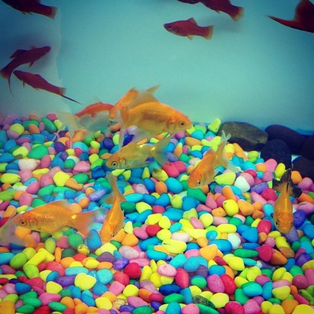 Fish 'n Colors!