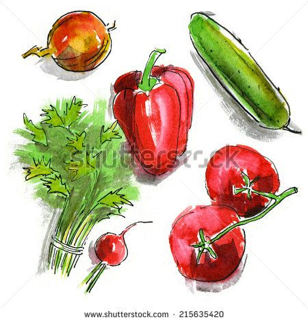 Watercolor vegetables: cucumber, tomato, pepper, parsley, radish