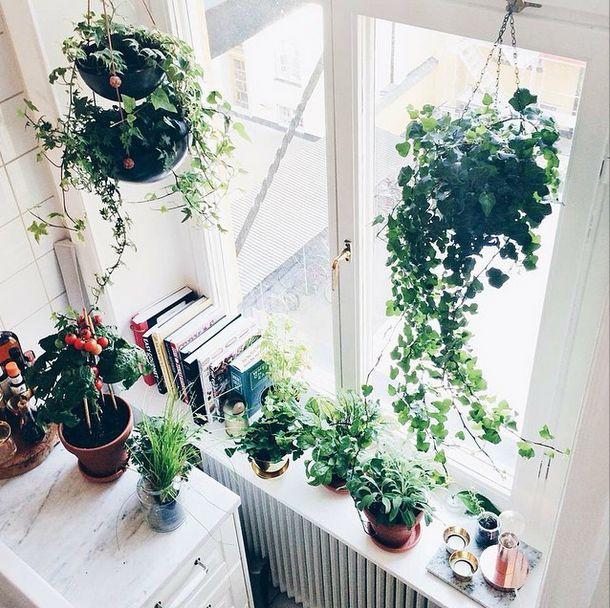kokböcker och blommor i fönstret