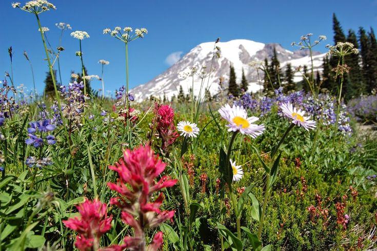 21 Best Images About Carbon River Area At Mt Rainier On