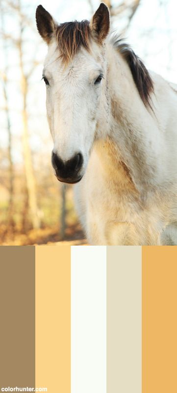 Ben Color Scheme