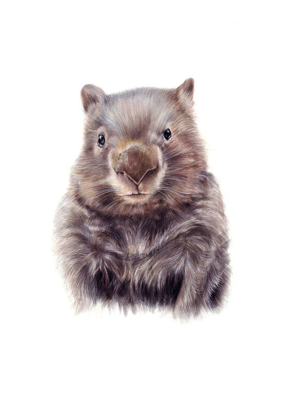 wombat illustration  Australian animals  nursery by NayanaIliffe