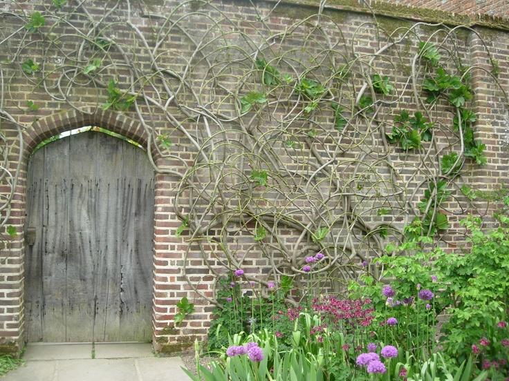 May 2009 UK Garden Photos