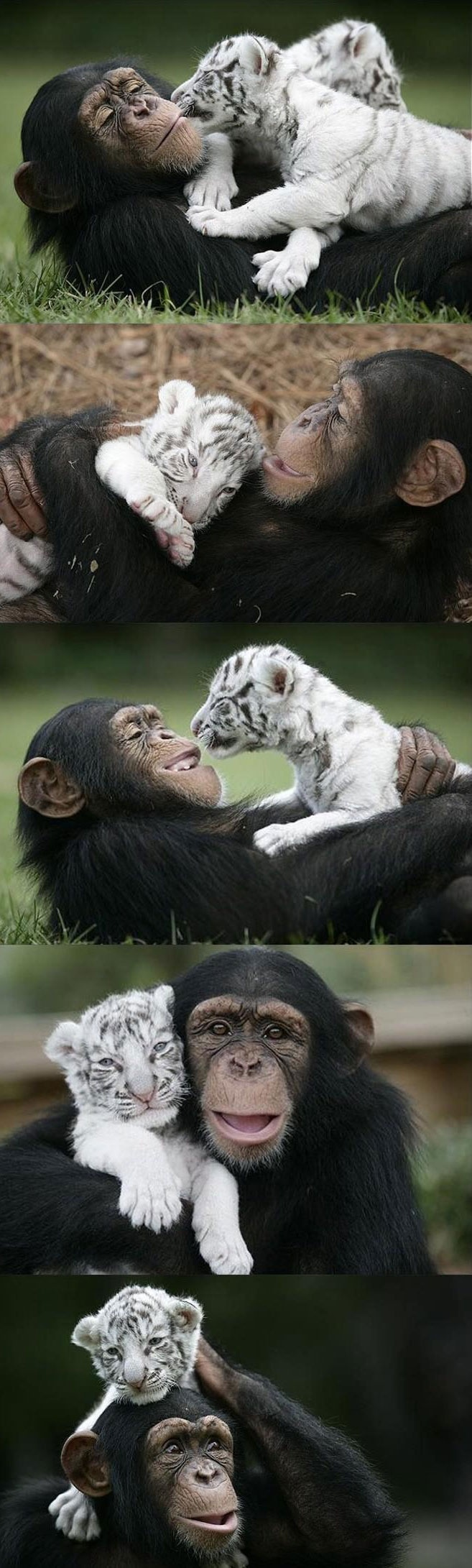 Monkey and tiger- so cute!