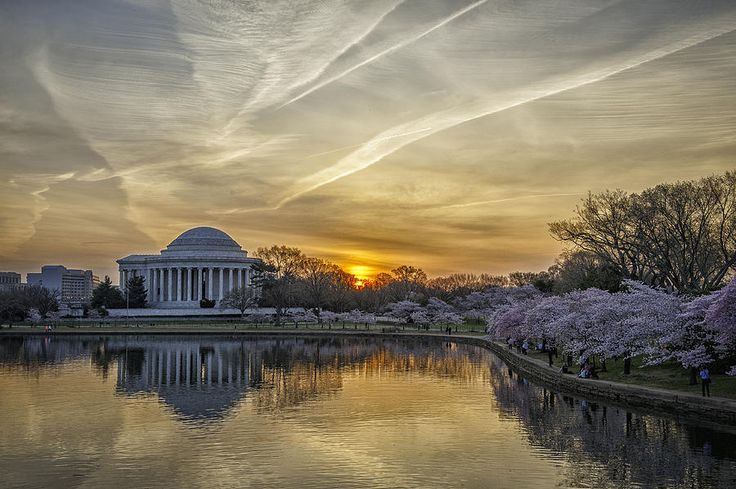 Jefferson Memorial at the Tidal Basin with cherry blossoms (Washington, DC)