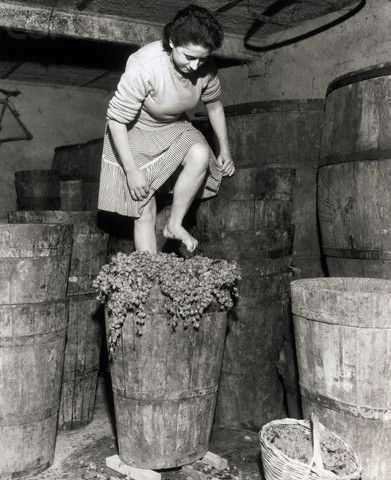 1957 Squasher-Woman. Frascati, Italy: Although presses have taken over almost everywhere in Italy, grapes are still crushed by foot at this winery in the famed wine making town of Frascati, near Rome, Italy. Atop a tall barrel, this woman steps through the ancient method, trampling bunches of grapes underfoot. The stems are removed later.