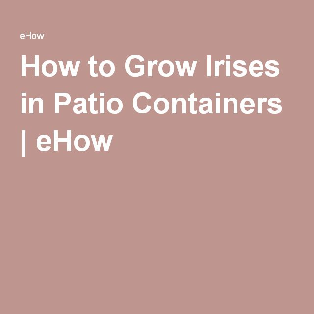 How to Grow Irises in Patio Containers | eHow