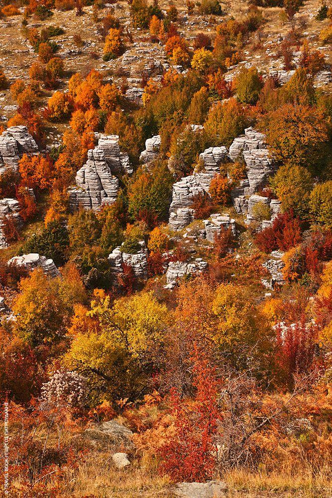Σπίτια, γεφύρια, καλντερίμια... στο Ζαγόρι ακόμη και τα δάση πέτρινα είναι!..Πέτρινα δάση
