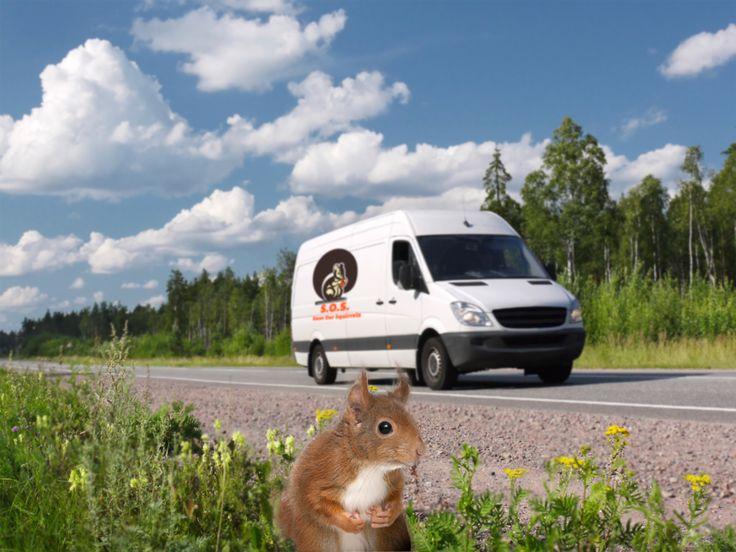 Acorn 1 to the rescue! #SaveOurSquirrels