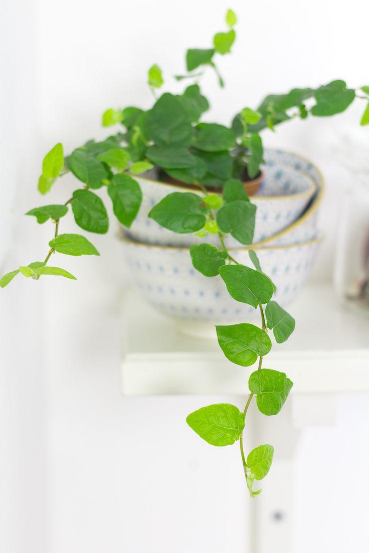 Zimmerpflanzen Bilder 95 best zimmerpflanzen images on house plants green