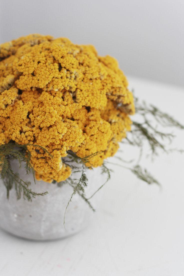 Yarrow Mound, Dried Flower Arrangement: Gardenista