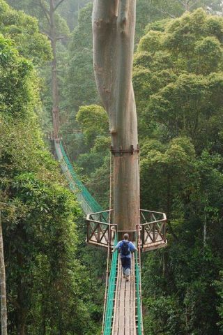 Walking through the canopy of the rainforest in Borneo. Add it to your 'to do' list if you plan to visit the Orang Utans.