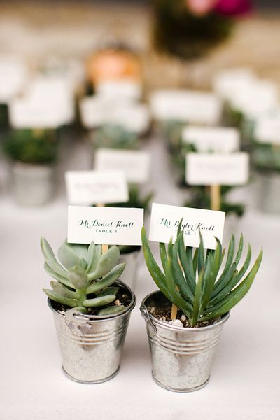 succulents doubling as favors + escort cards | Elaine Palladino #wedding
