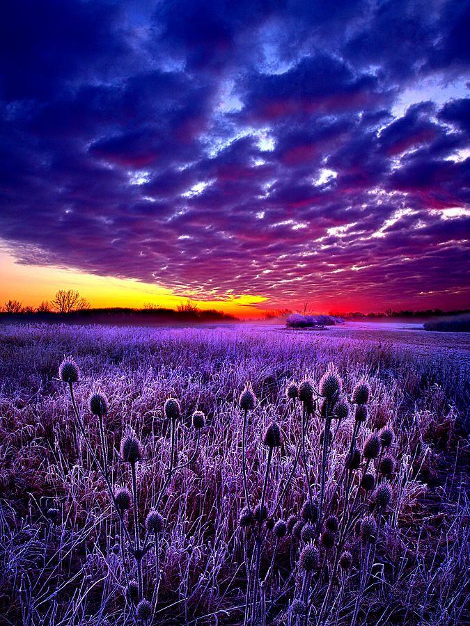 картинки фиолетовый пейзаж наличии может