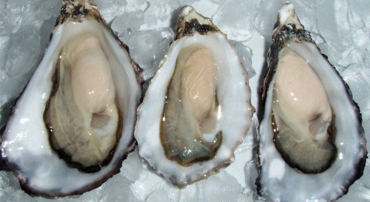 Oyster help maintain collagen and elastin fibers that give skin its firmness and help prevent sagging and wrinkles.