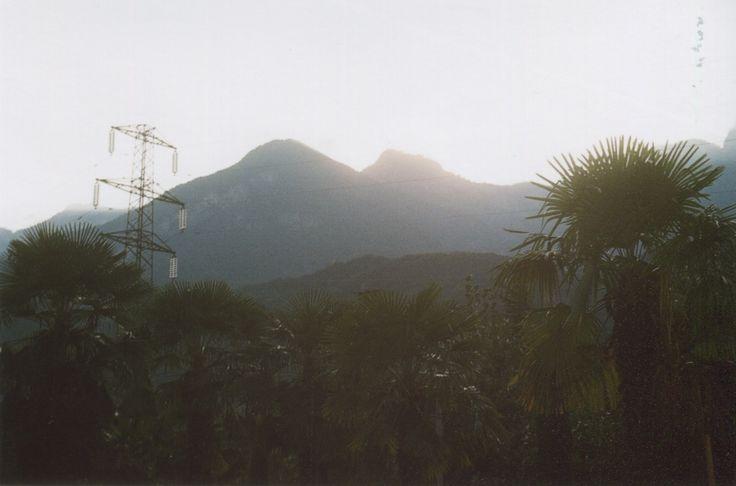 palms/mountains