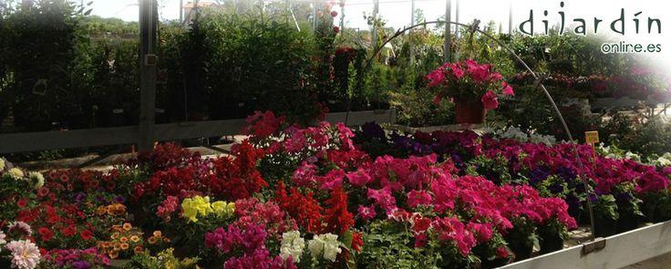 Buenos días a todos!! www.dijardinoline.es #jardineria #garden #GardenCenter