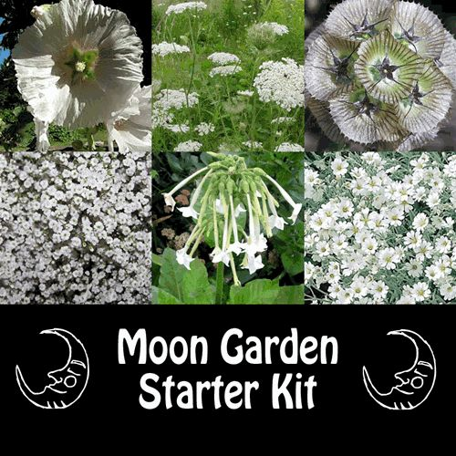 A Moon Garden is filled with plants and flowers that are meant to be most appreciated at dusk or after sunset. Moon Gardens contain flowers that bloom at night, flowers that echo the shapes of the night and flowers that attract night pollinators: Giant H