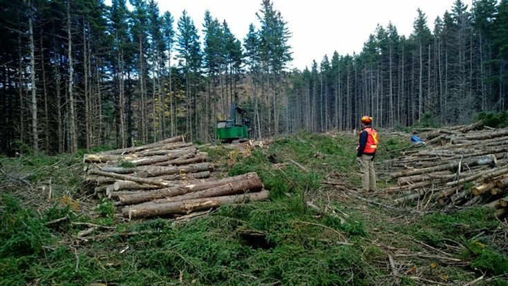 A timberland investment management organisation based in Boston has confirmed that it has planted an average of 32 million trees per year since 1985. The Hancock Timber Resource Group (HNRG) has planted more than two trees to replace every tree that it has harvested since 1985 and has now reached